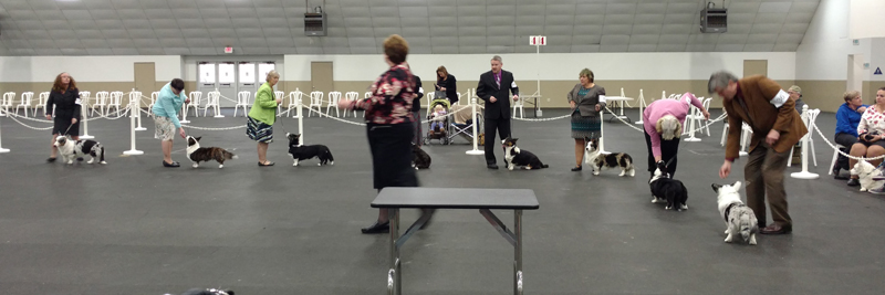 Best in puppy sweeps lineup